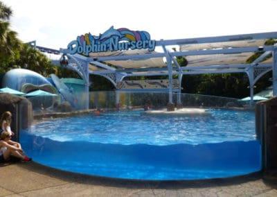 seaworld-dolphin-nursery